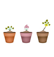 Pink and yellow flowers in ceramic pots vector