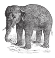 Asian elephant vintage engraving vector