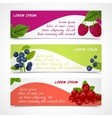 Berries banners set vector