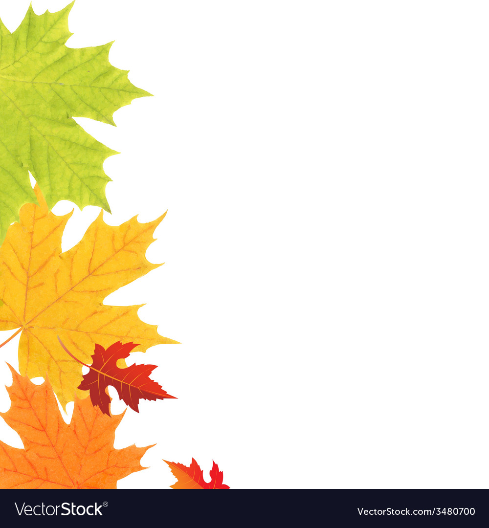Color leaves border vector | Price: 1 Credit (USD $1)