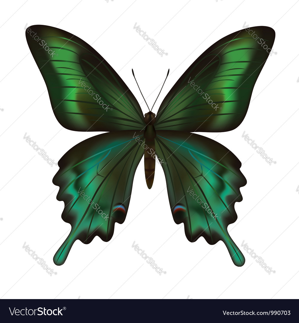 Beautiful realistic green butterfly isolated vector | Price: 1 Credit (USD $1)