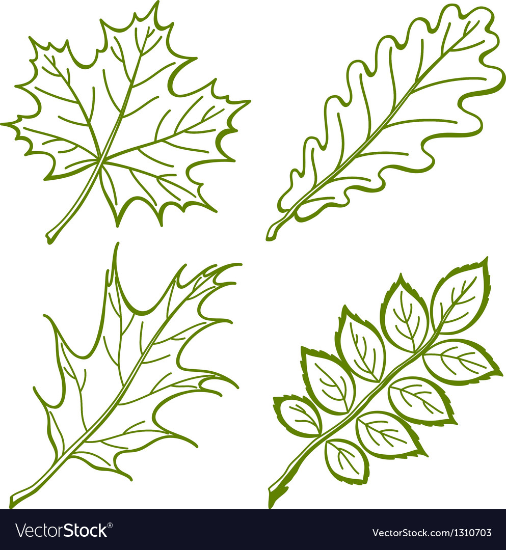 Leaves of plants pictogram set vector | Price: 1 Credit (USD $1)