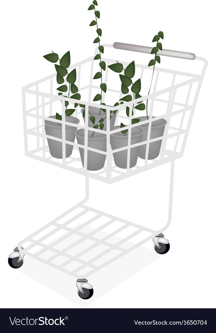 A set of creeper plant in a shopping cart vector | Price: 1 Credit (USD $1)