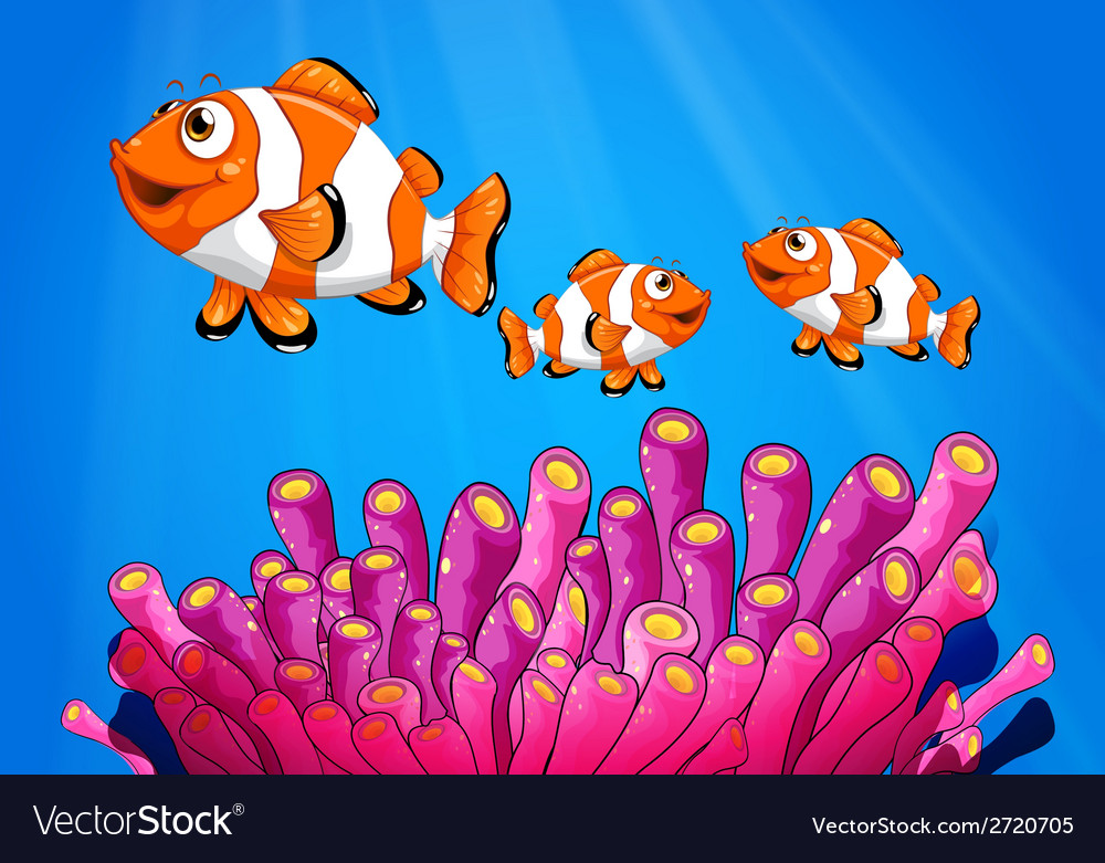 Clownfishes under the sea vector | Price: 1 Credit (USD $1)