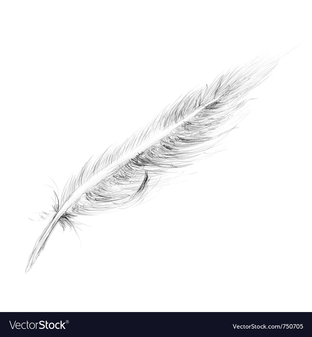 Feather hand drawn vector | Price: 1 Credit (USD $1)