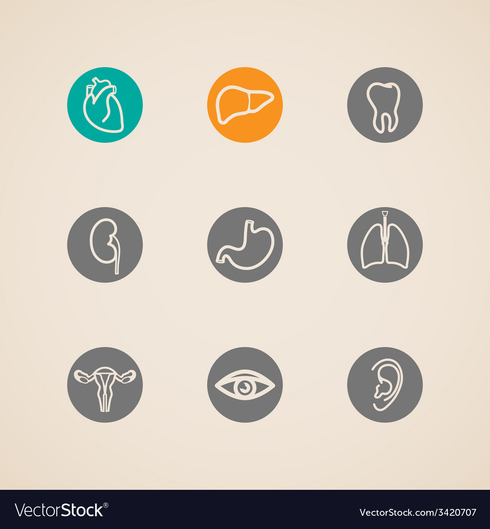 Human organ icons set vector | Price: 1 Credit (USD $1)