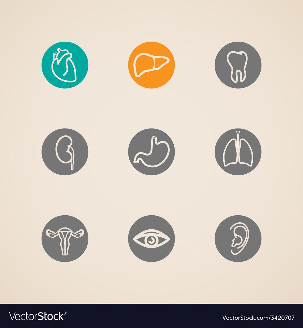 Human organ icons set vector | Price: 1 Credit (USD $1)