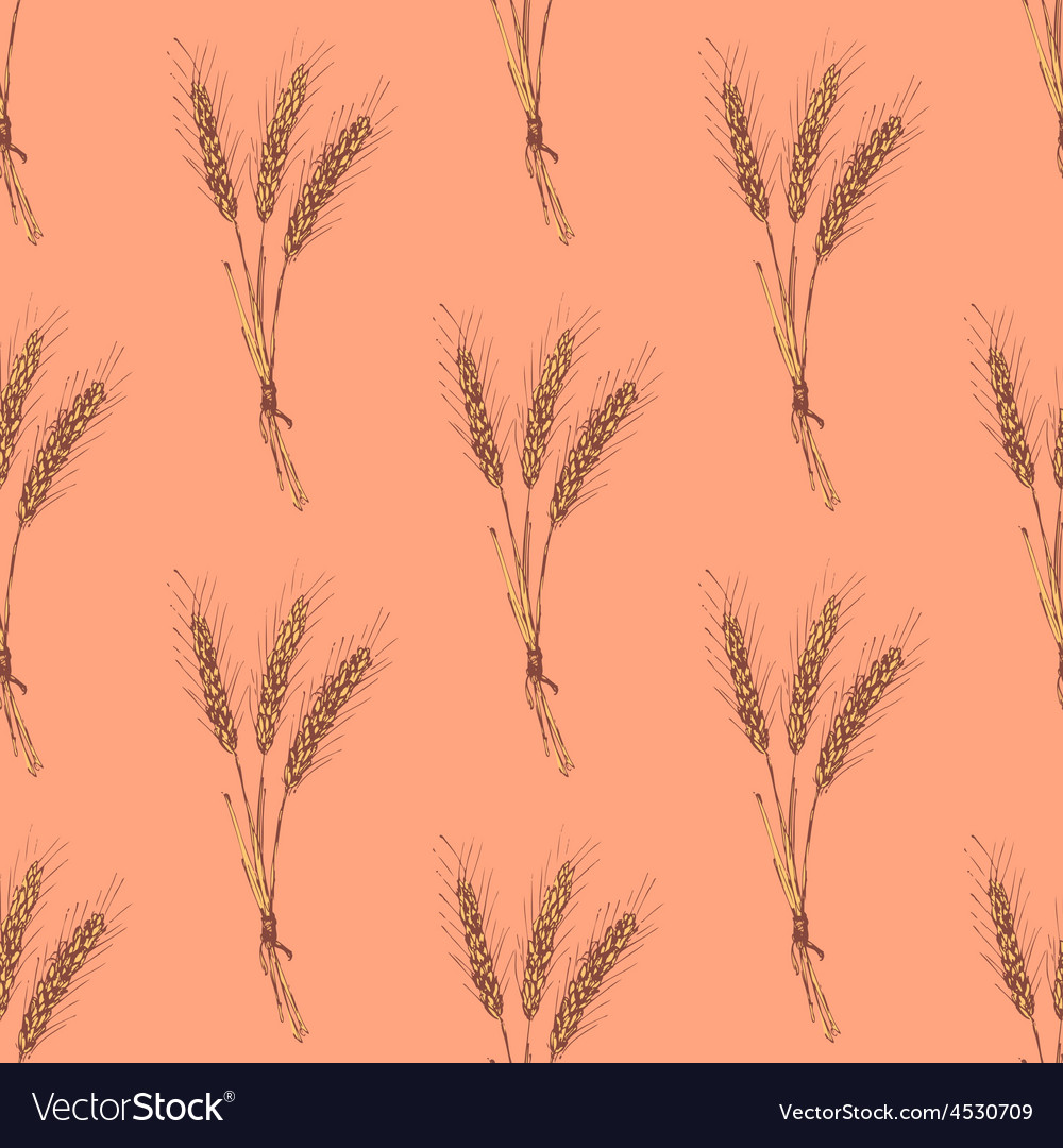 Sketch wheat bran in vintage style vector | Price: 1 Credit (USD $1)