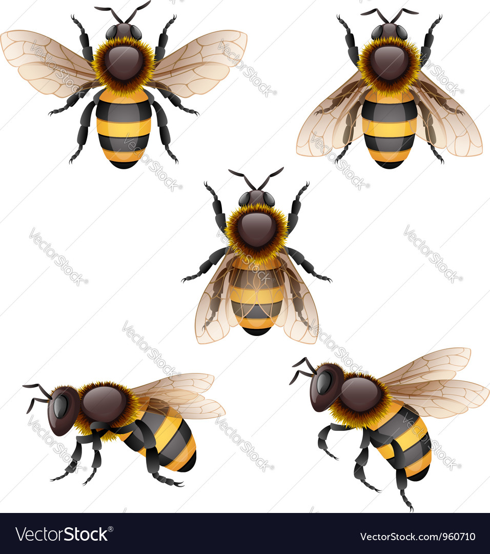 Bee vector | Price: 3 Credit (USD $3)