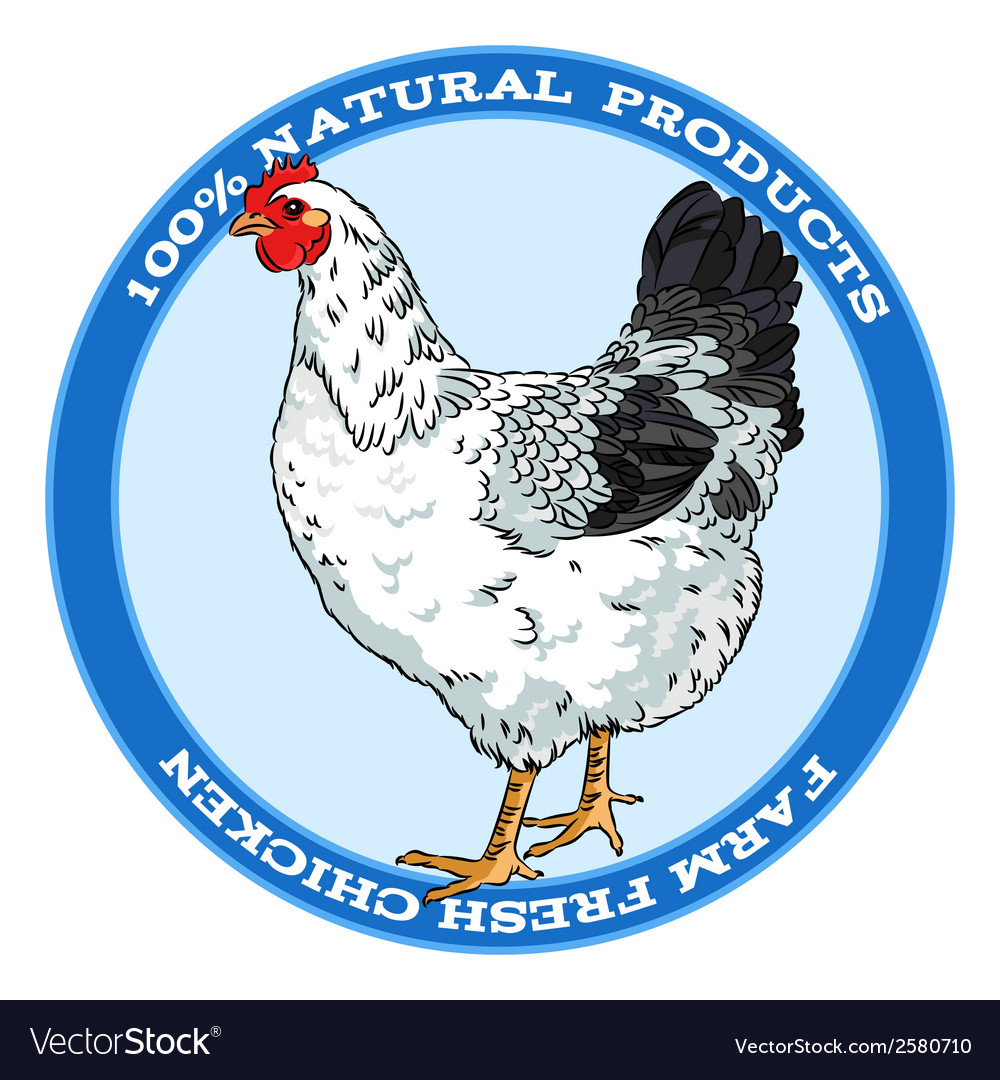 Black and white broody chicken vector   Price: 1 Credit (USD $1)