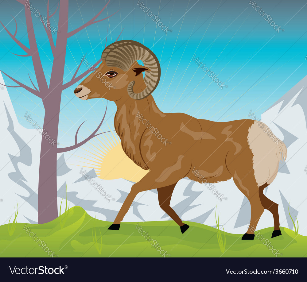 Wild ram in the mountains3 vector | Price: 1 Credit (USD $1)