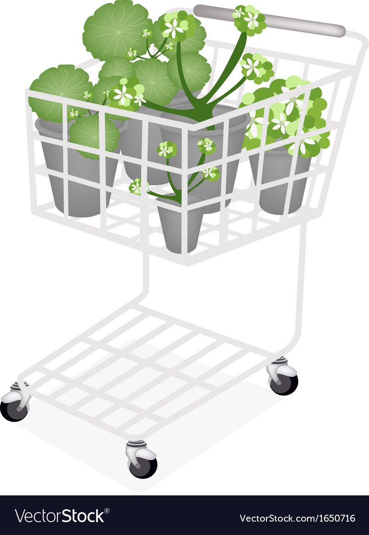 A set of asiatic pennywort in a shopping cart vector | Price: 1 Credit (USD $1)