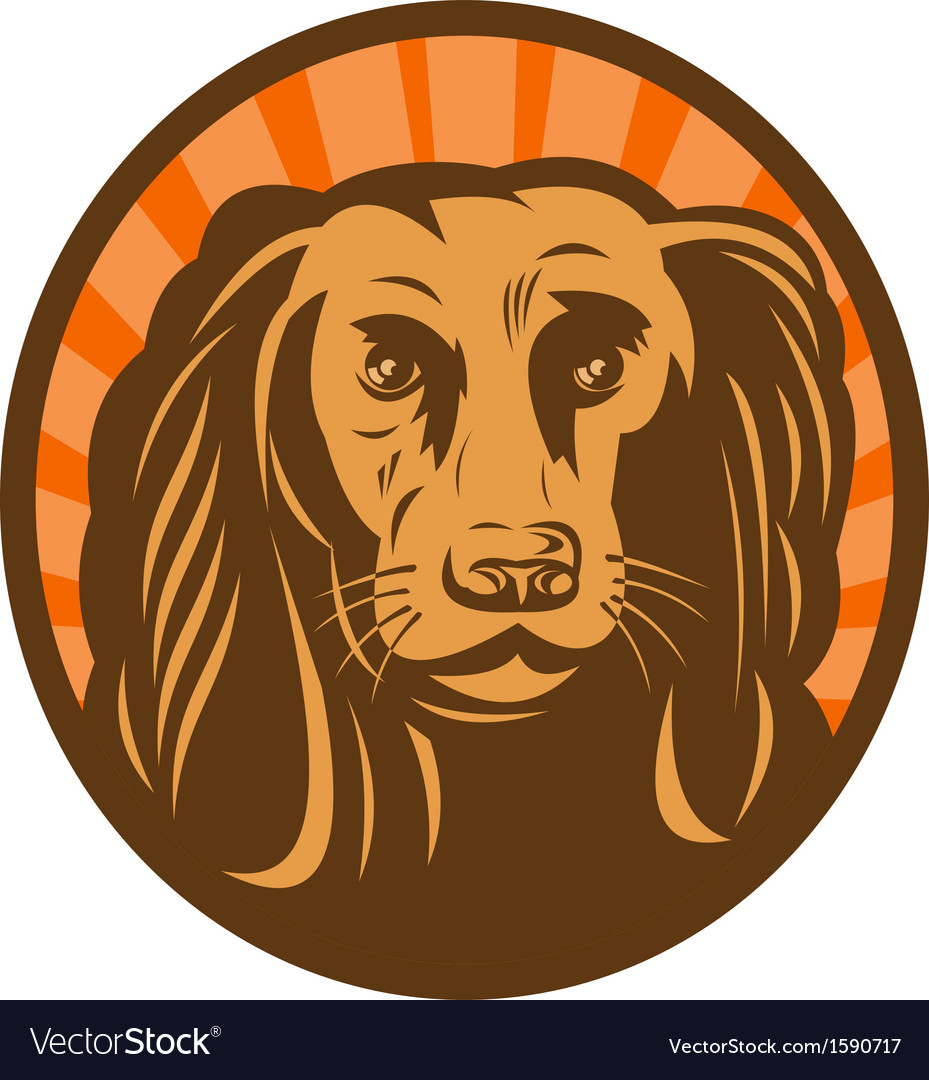 Cocker spaniel head front view with sunburst vector | Price: 1 Credit (USD $1)