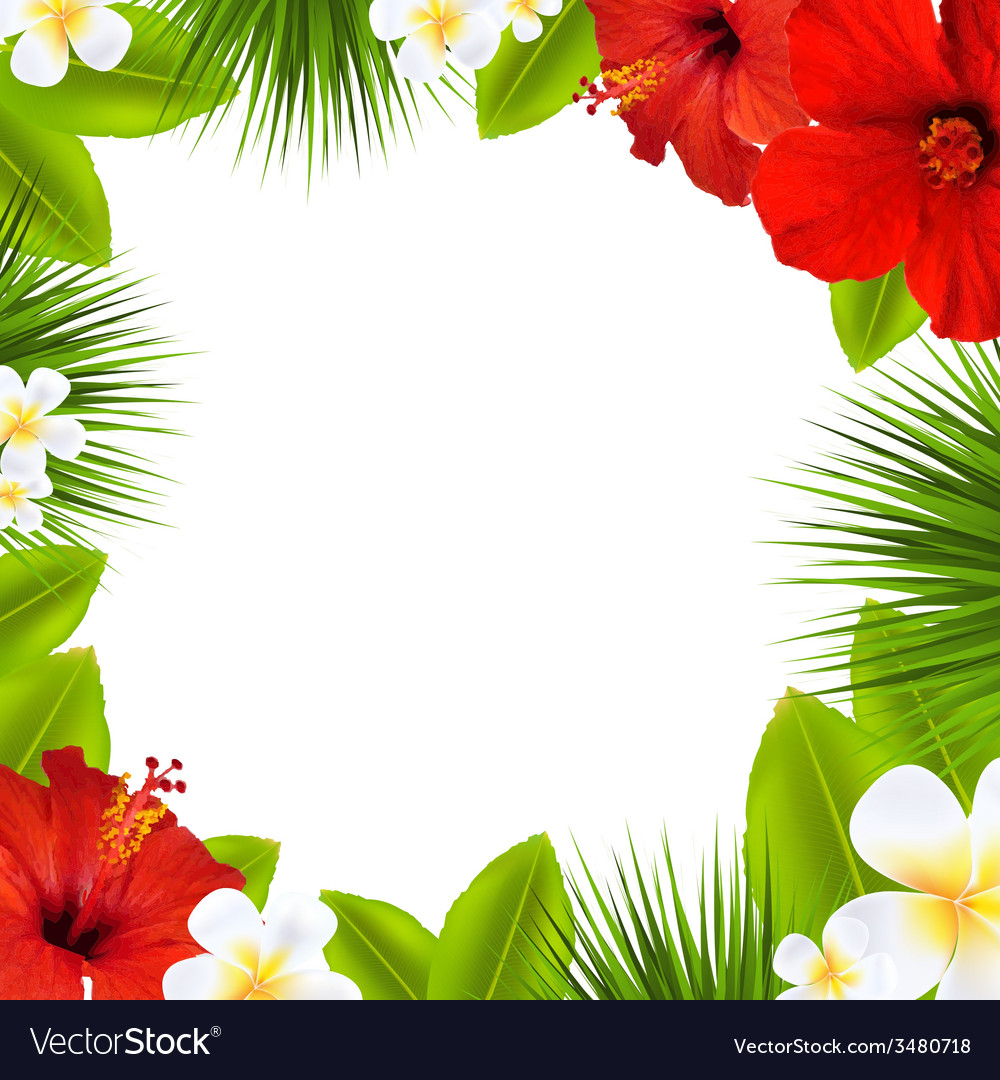 Tropical border vector | Price: 1 Credit (USD $1)