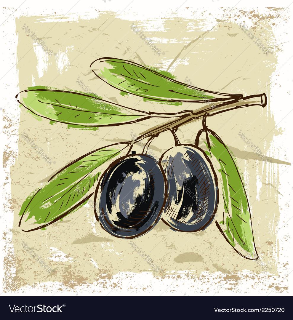 Fresh olive vector | Price: 1 Credit (USD $1)