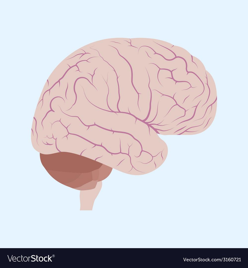 Brain vector   Price: 1 Credit (USD $1)