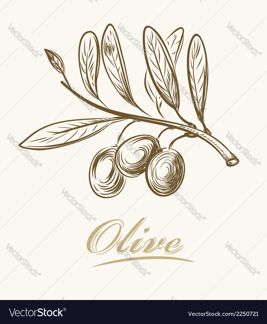 Fresh olive vector | Price: 1 Credit (USD $1)