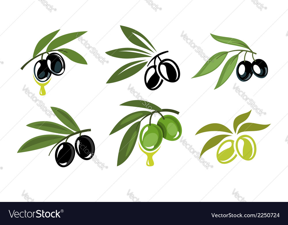 Green and black olives vector | Price: 1 Credit (USD $1)