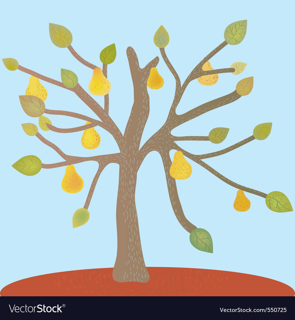 Pear tree vector | Price: 1 Credit (USD $1)