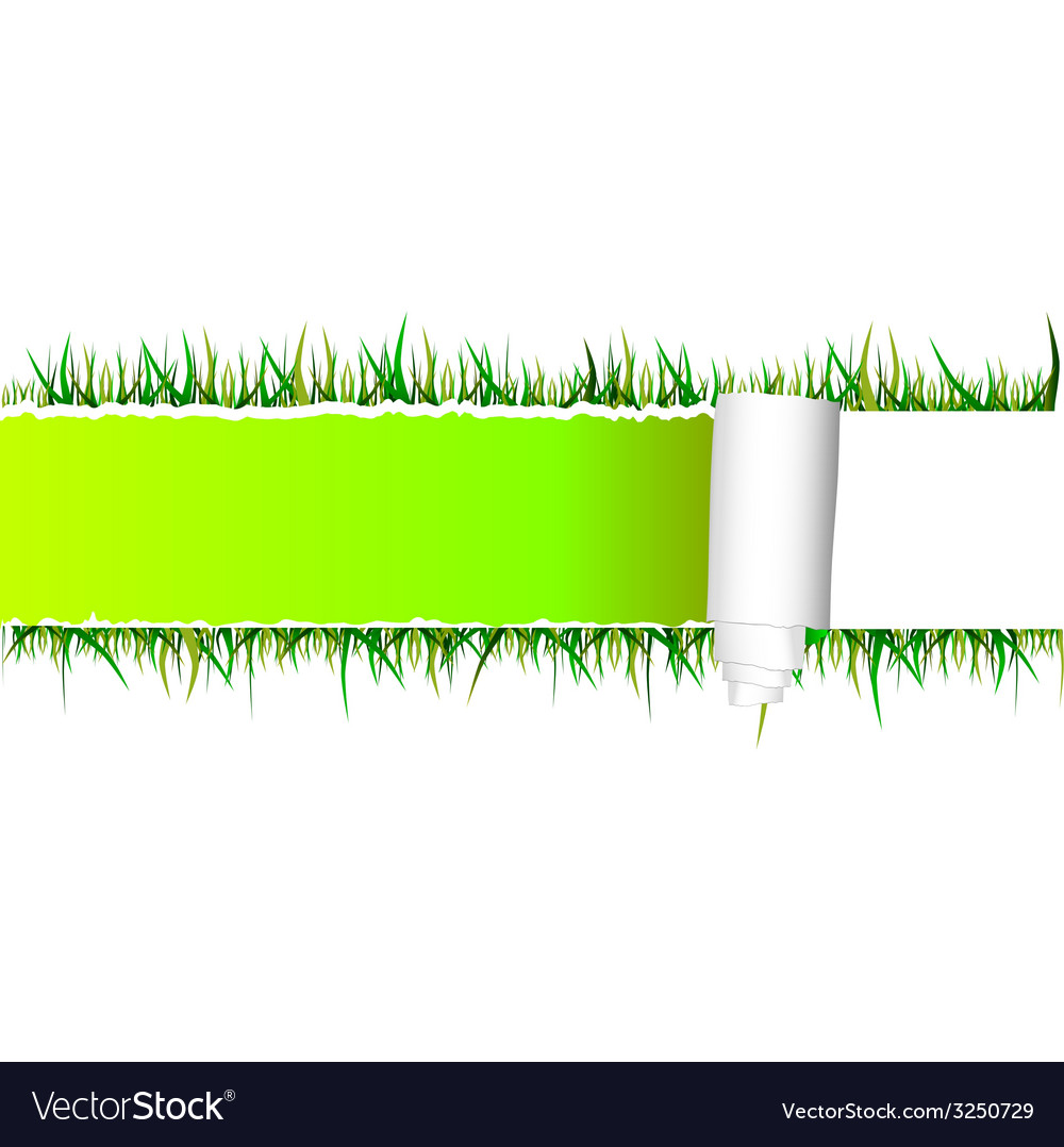 Tearing paper and grass vector | Price: 1 Credit (USD $1)