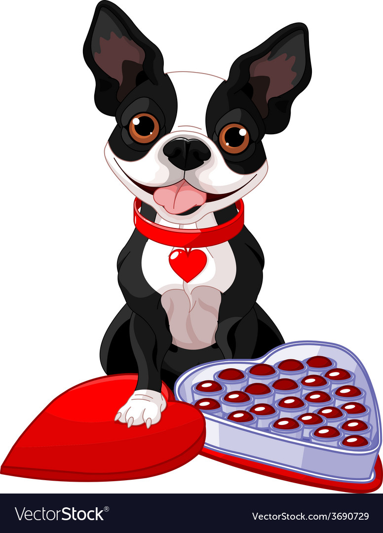 Valentine day boston terrier vector | Price: 1 Credit (USD $1)