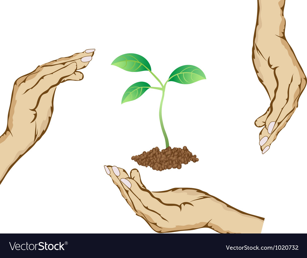 Hands protecting green plant vector | Price: 1 Credit (USD $1)
