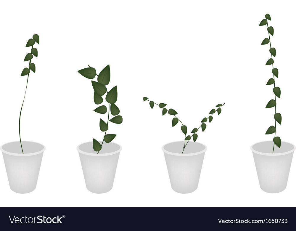 A set of creeper plant in flower pot vector | Price: 1 Credit (USD $1)