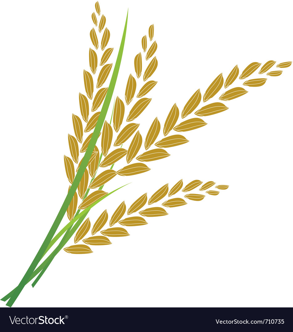 Rice vector   Price: 1 Credit (USD $1)