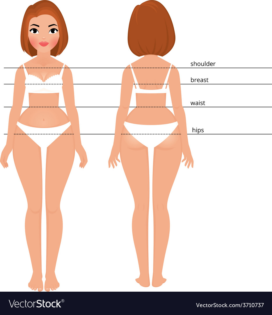 Woman body full length front and back vector | Price: 1 Credit (USD $1)