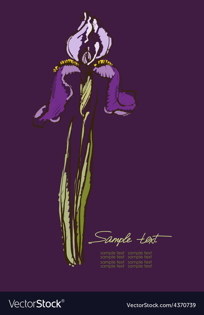 Hand drawing irises on a purple background vector | Price: 1 Credit (USD $1)