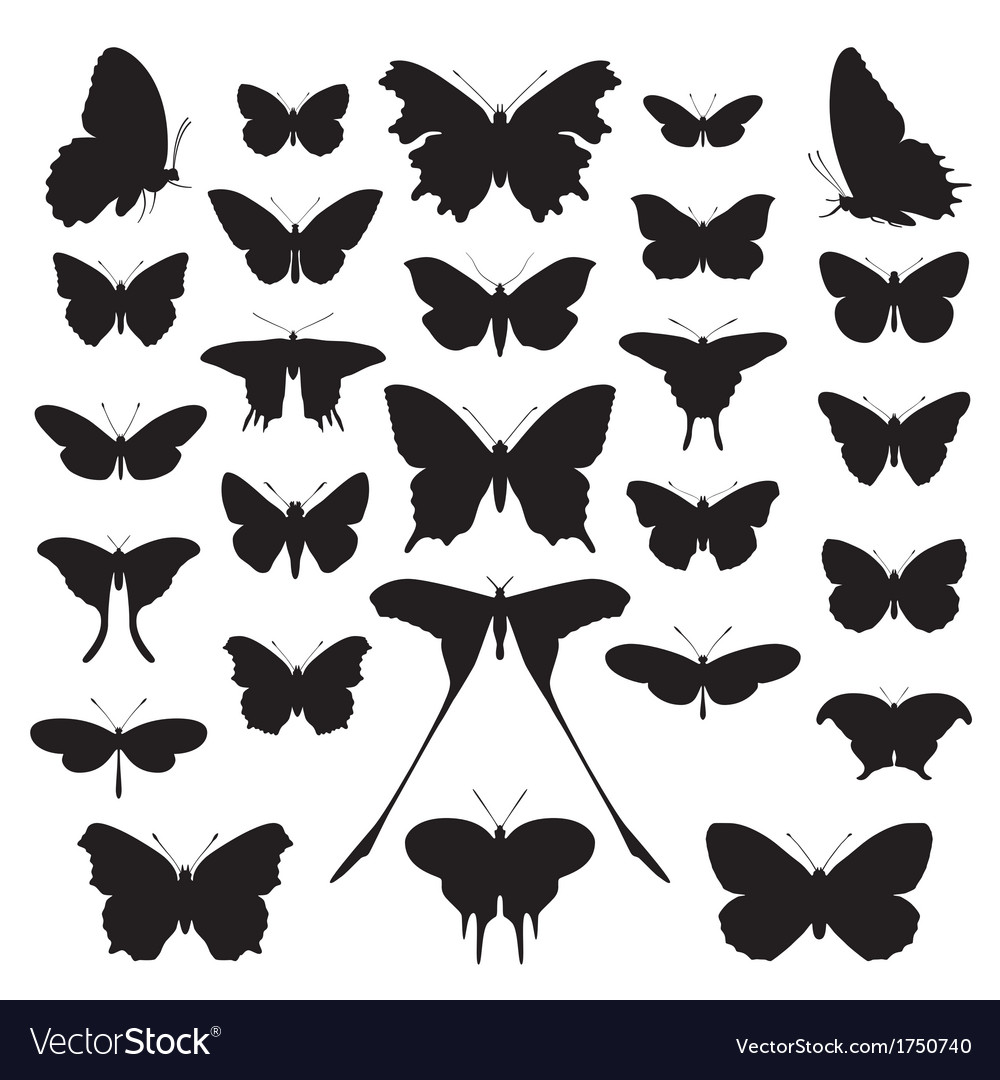 Butterfly silhouette vector | Price: 1 Credit (USD $1)