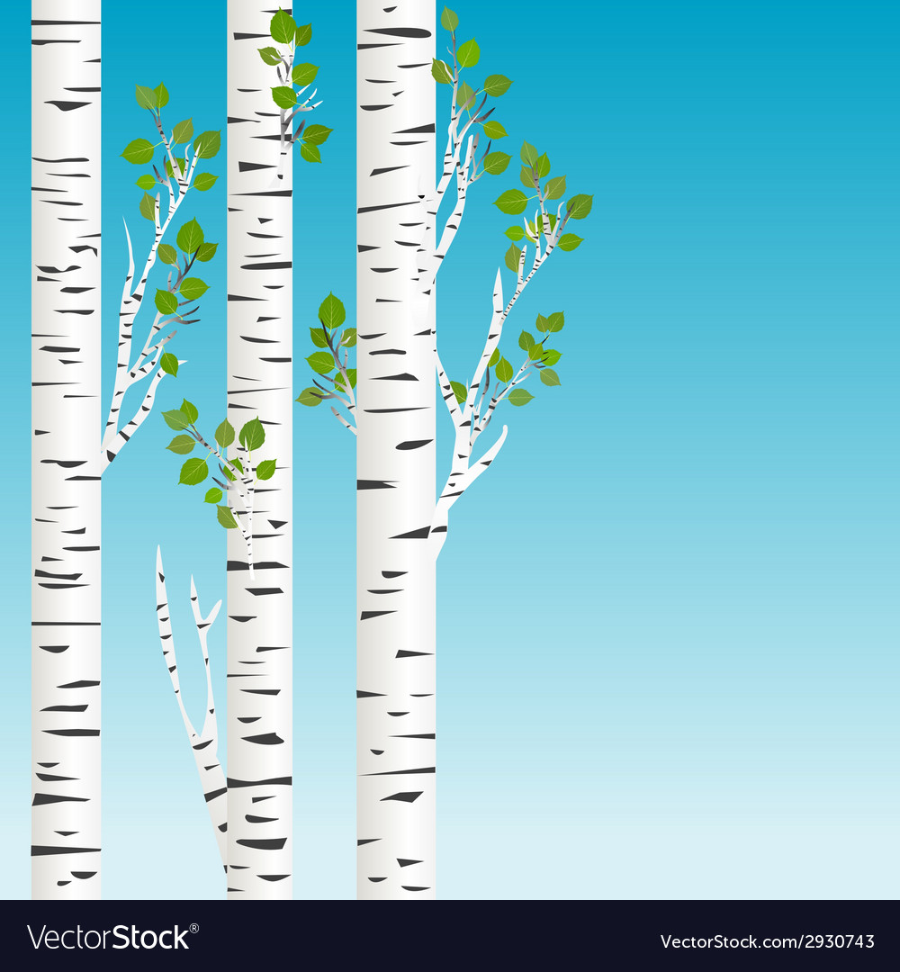 Birch trees with green leaves background vector | Price: 1 Credit (USD $1)