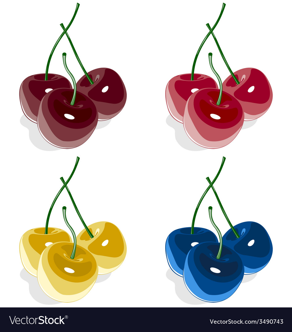 Sweet cherry multicolored isolated on white vector | Price: 1 Credit (USD $1)