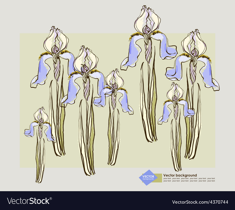 Card design with decorative iris flower vector | Price: 1 Credit (USD $1)