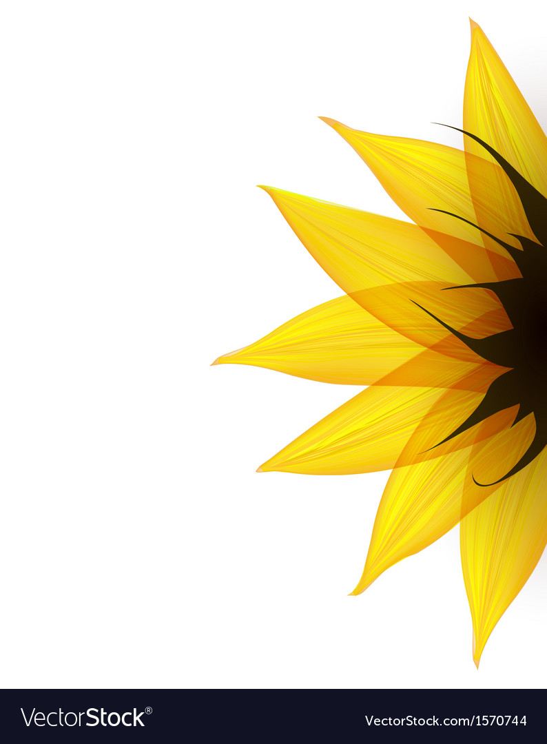 Sunflower part vector | Price: 1 Credit (USD $1)