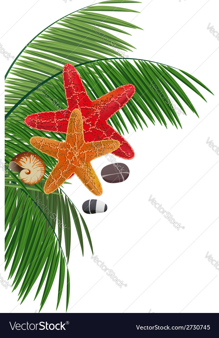 Palm branches starfishes pebble and cockleshell vector | Price: 1 Credit (USD $1)