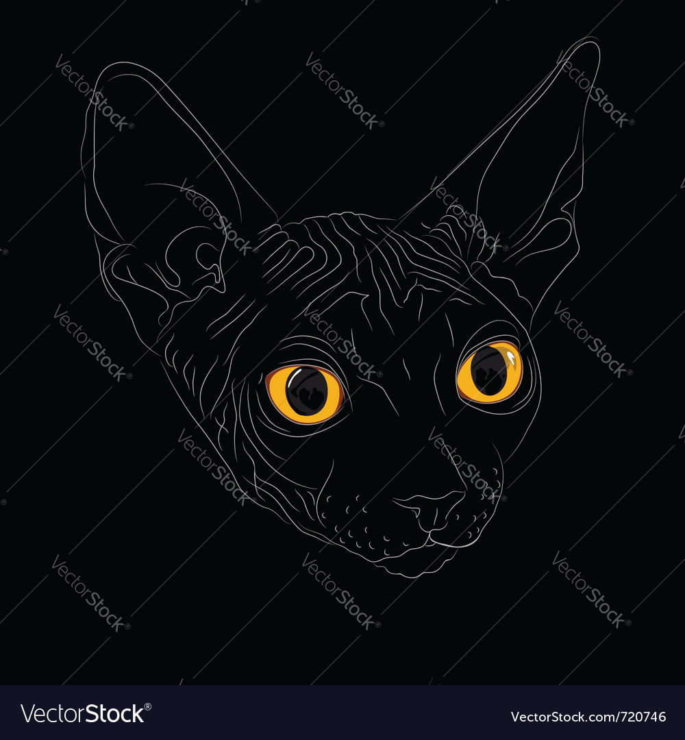 Cat breed sphinx vector | Price: 1 Credit (USD $1)