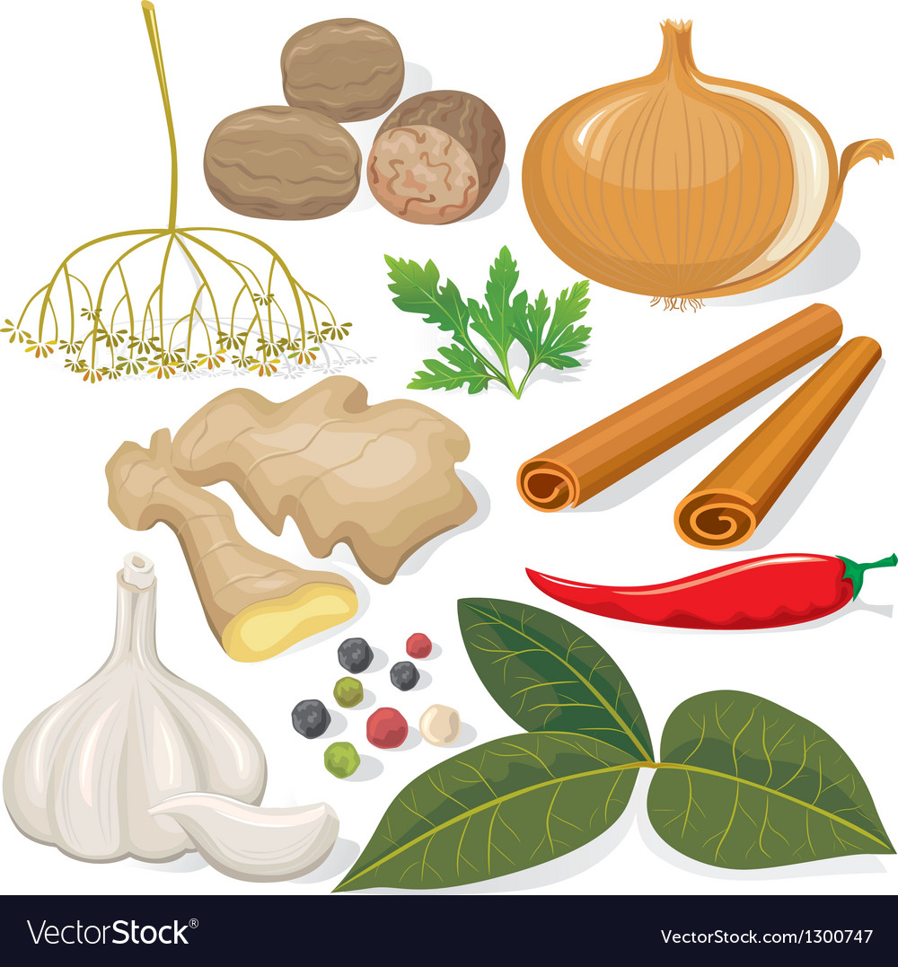 Spices and vegetables for cooking vector | Price: 1 Credit (USD $1)