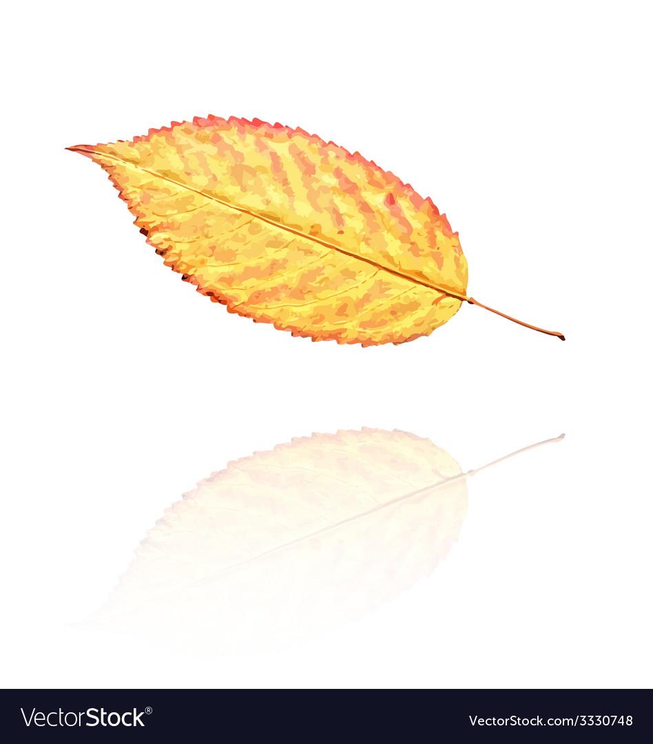 Dry leaf vector | Price: 1 Credit (USD $1)