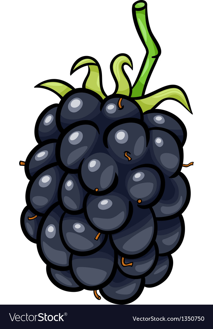 Blackberry fruit cartoon vector | Price: 1 Credit (USD $1)