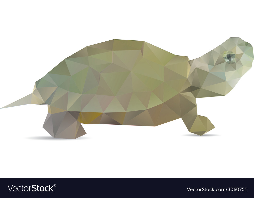 Turtle isolated vector | Price: 1 Credit (USD $1)