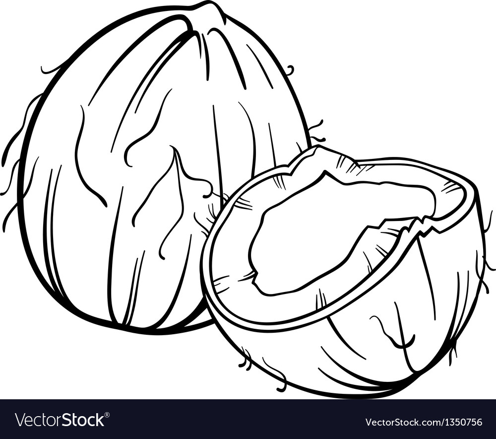 Coconut for coloring book vector | Price: 1 Credit (USD $1)