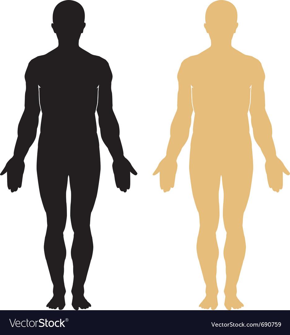 Human body vector | Price: 1 Credit (USD $1)