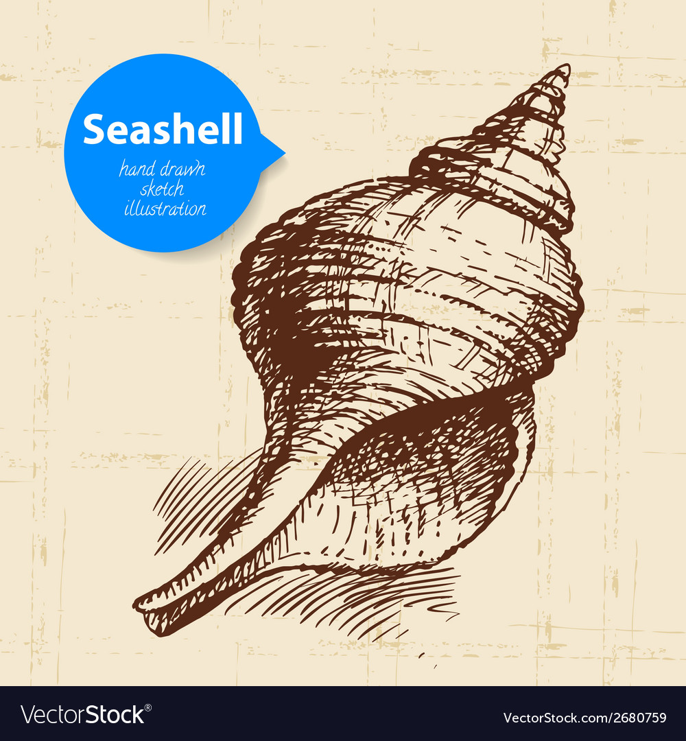 Seashell hand drawn sketch vector | Price: 1 Credit (USD $1)