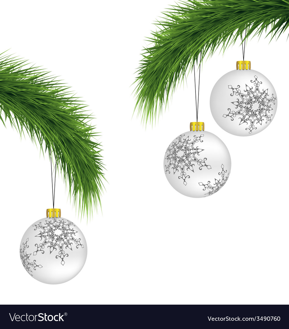 White christmas balls on pine branches isolated on vector | Price: 1 Credit (USD $1)