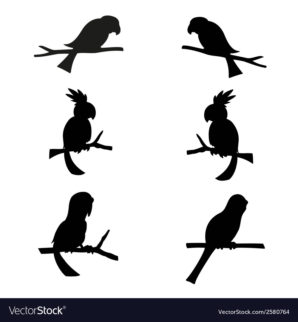 Parrots silhouettes vector | Price: 1 Credit (USD $1)