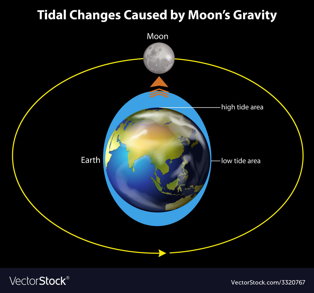 Tidal changes vector | Price: 1 Credit (USD $1)