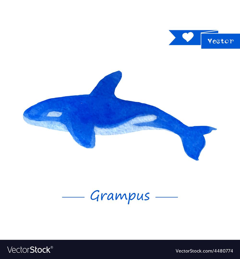 Blue grampus  handdrawn watercolor vector   Price: 1 Credit (USD $1)