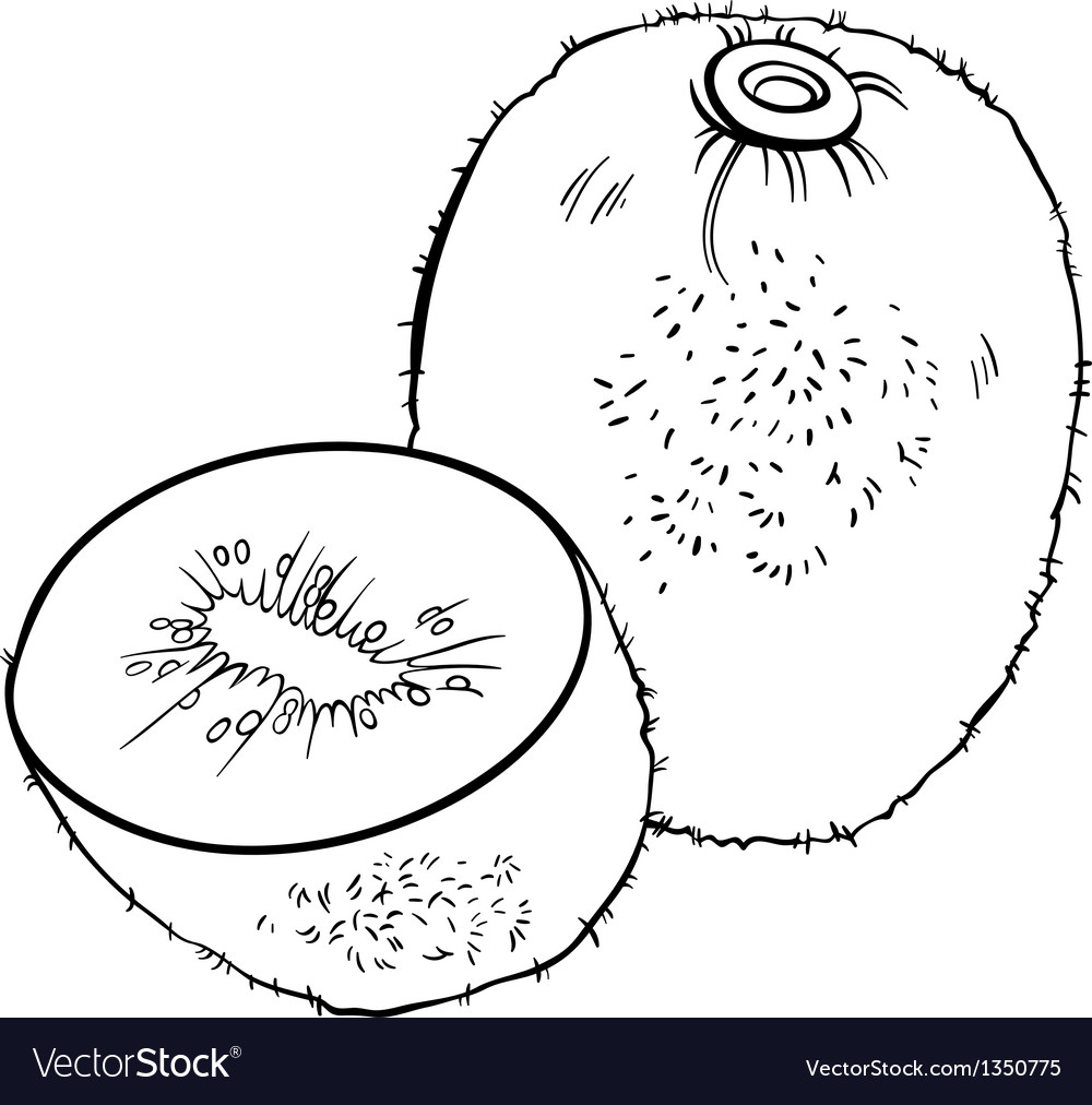 Kiwi fruit for coloring book vector | Price: 1 Credit (USD $1)