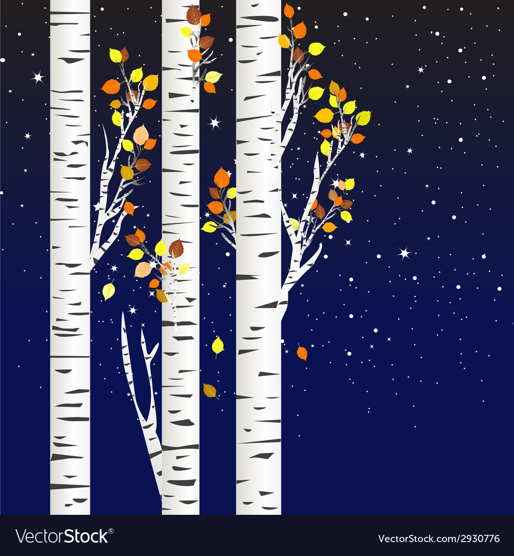 Birch trees in the autumn over a starry night vector | Price: 1 Credit (USD $1)